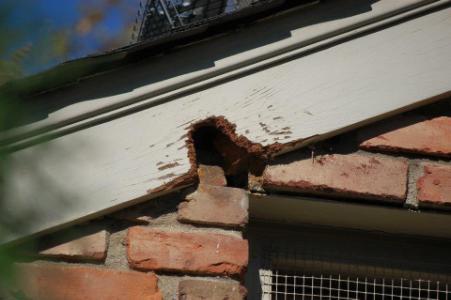 Squirrel-Roof-Damage-2