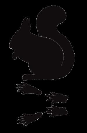 Squirrel-Tracks-Sillohuette