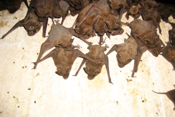 Bats-On-Walls