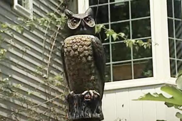 Owl-Decoy-Bat-Prevent
