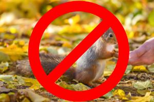 Squirrel-No-Feeding-1