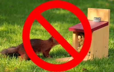 Squirrel-No-Feeding-2