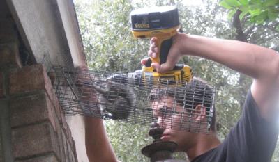Squirrel-Professional-3
