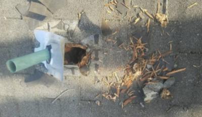 Squirrel-Roof-Damage-3