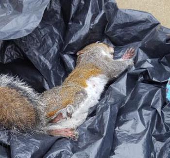 Squirrel-Unalive