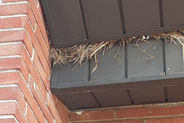 Bird-Nest-Building