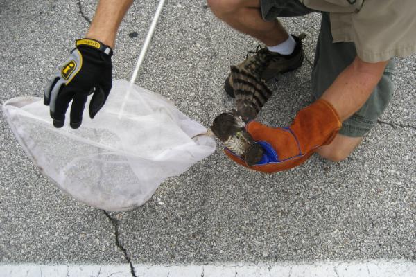 Bird-Removal-Professional-4
