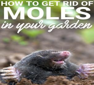 Mole-Garden