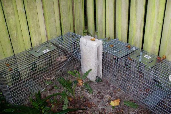 Opossum-Traps