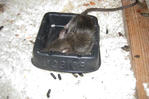 Rat-Traps-3