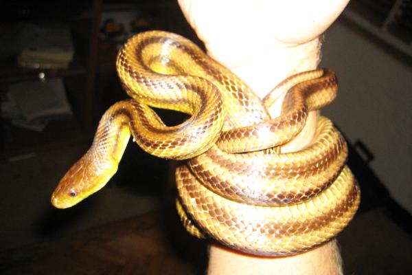 Snake-5
