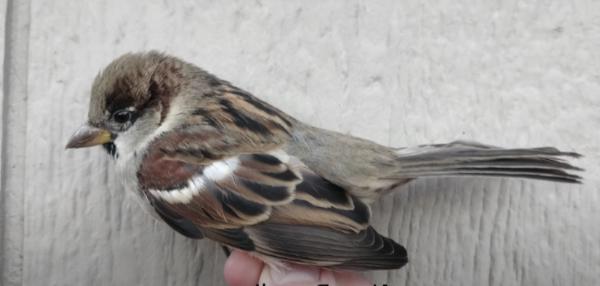Sparrow-6