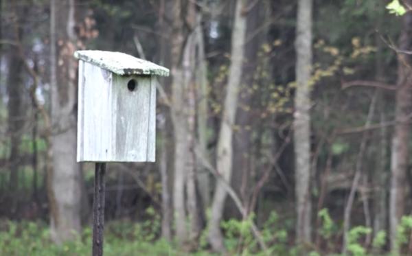 Sparrow-Box