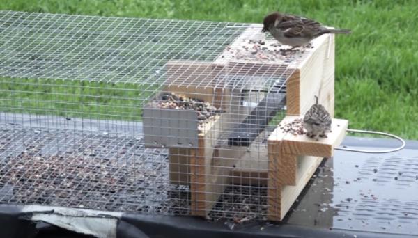 Sparrow-Trap