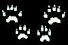 chipmunk-tracks